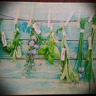 Canvas decorative herbs collection frame