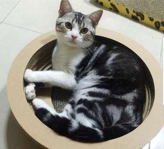Cat Sofa Scratch Bowl