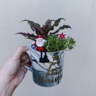 Christmas Succulent Arrangement by Highfields x MyLittleCrafter (Marble)