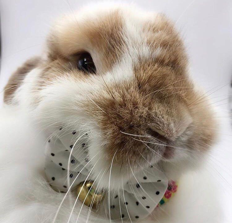 Pet Dog Cat Rabbit Hamsters Collar