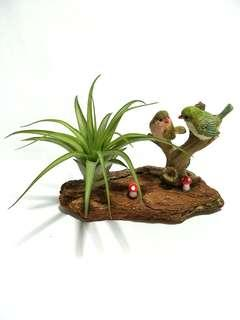 【Loving 2 】Birds on Wood Bark Miniature Figurine Ornament with Air plant (Tillandsia) Display Terrarium Decoration for Home Office Gift
