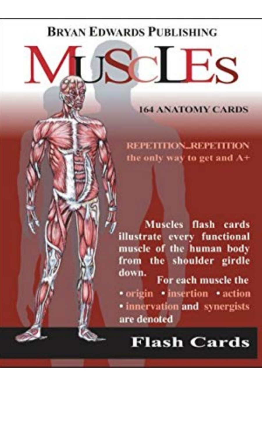 Muscles Anatomy Flash Cards Sports Sports Games Equipment On