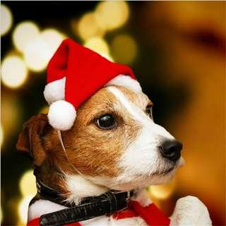 Pet Christmas decoration clothes hat skirt cat dogs dog cats red cap hats