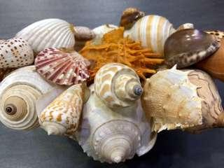 Seashells Deco