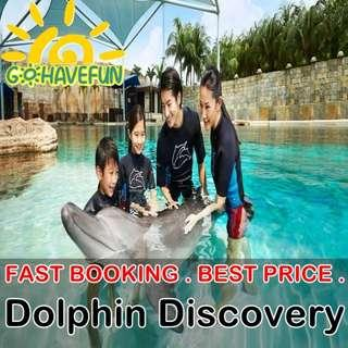Dolphin Discovery - Adventure Cove Waterpark - Best price