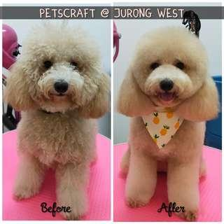 Dog grooming at jurong west (newly open)