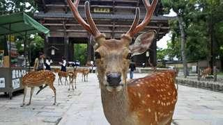 SALE! Nara Park, Kyoto and Kobe Day Tour from Osaka
