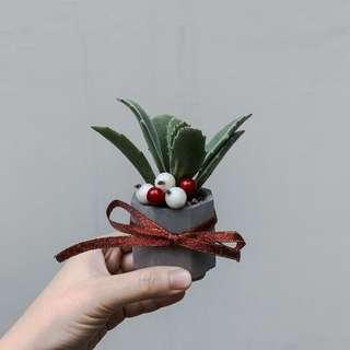 Succulent Christmas Gift