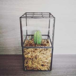植物玻璃擺設-仙人掌