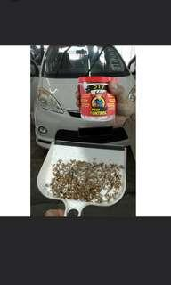 DIY Pest Control for Cockroach