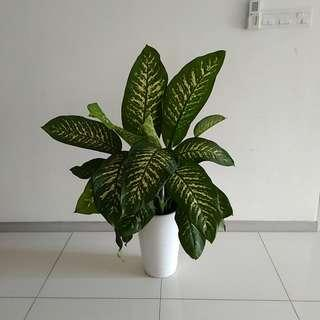 Real plant