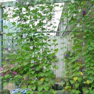 Nylon Garden Net Support for Climbing Vine Plants
