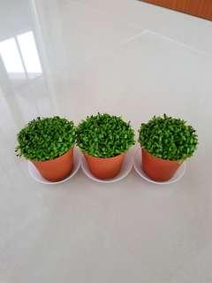 Happy Plant For Office & Gift!