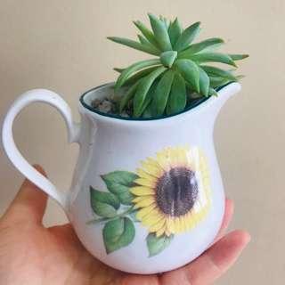 Succulent in a ceramic cup