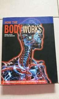 How Does The Body Works