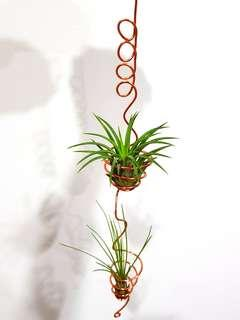 Air Plant hanging design for sale!