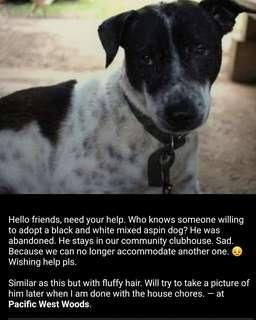 Who is willing to adopt