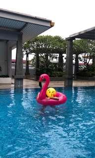 Pink Giant Loop Flamingo (for rent / purchase)