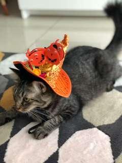 Cat Halloween Costume Hat