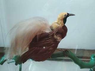 Pajangan Burung Cendrawasih (Air Keras)