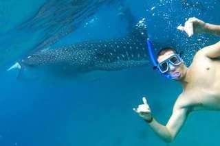 Cebu: Oslob Whale Shark Watching and Tumalog Falls Day Tour
