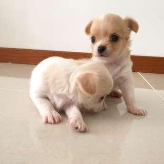 I am Looking for small puppy or dog to adopt!