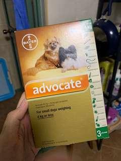Advocate For Small Dogs