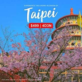 4D3N ALL IN Taipei Cherry Blossom Tour