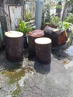 Garden set of table and stools(Chengal tree)