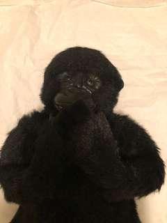Baby Gorilla cutie (baby gori beneran)