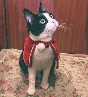 Pet Christmas cloak