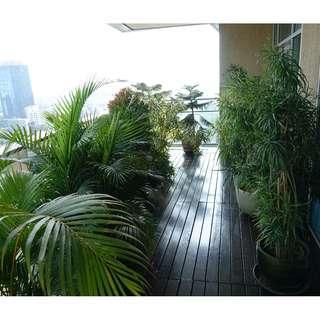 Pottet Plants