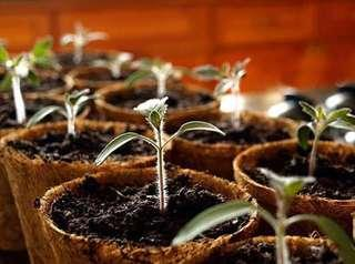 Coconut Coir Pots for your kitchen herbs