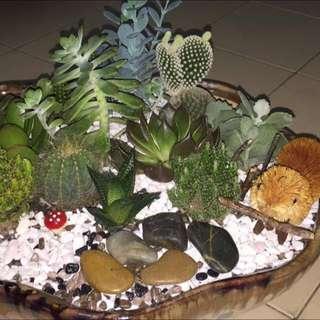 Terrarium Plant (Customizable)