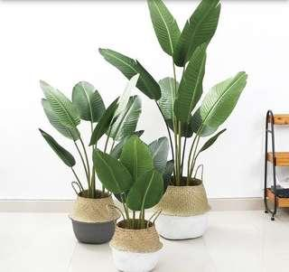 Artificial plant 🌱 with original material( rubber)