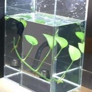 Acrylic Fish Tank (3L) - Lightweight with Smooth Edges