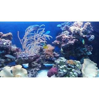 Fish Tank Custom Installations and Maintenance Service