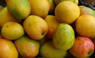 Guadalupe Mangoes Small