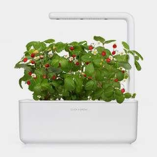 Click & Grow Smart Garden 3. With Dwarf Pea refill pack, with Original Box. Good Condition.