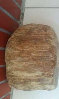 🚚 木化玉