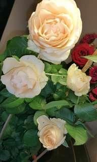 Rose Giant Breed Champagne Color With Fragrant