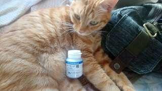 貓狗 活腎炭 50包/90粒裝粉裝 $275 日本共立製藥出品 附送貓貓超開胃零食一包