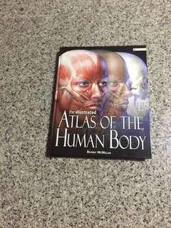 The illustrated ALTAS OF THE HUMAN BODY
