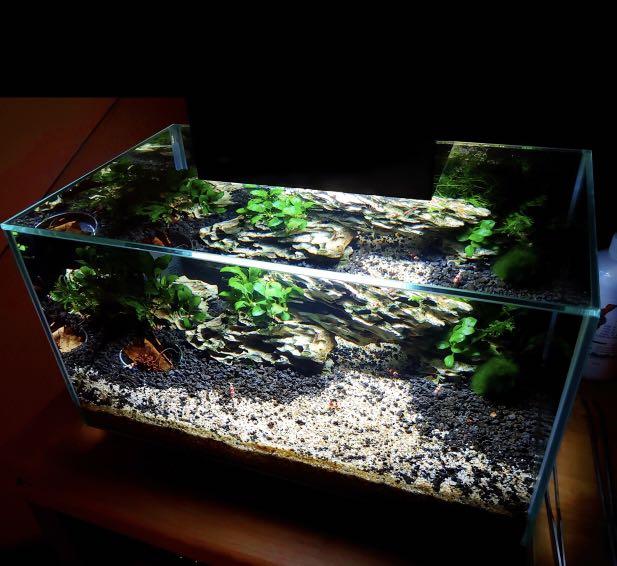 Fluval Edge Aquascape - Aquascape Ideas