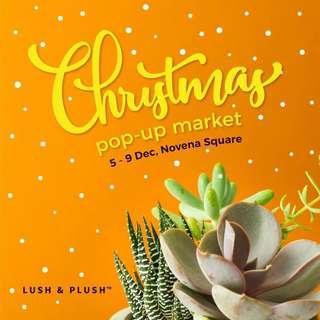 Succulent arrangements at Christmas Pop-up