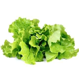 GREEN LETTUCE PLANT PODS for Click and Grow BNIB
