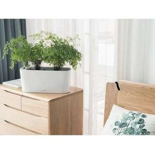 Auto-watering system planter pot