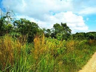 Tanah Kosong 3 Ekar, Yong Peng, Johor