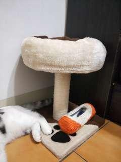 🚚 貓跳台+貓玩具