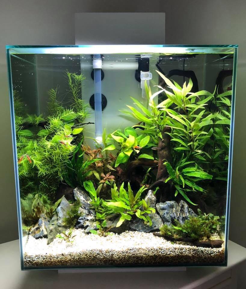 FLUVAL EDGE 46L, Pet Supplies, For Fish, Fish Tanks on ...